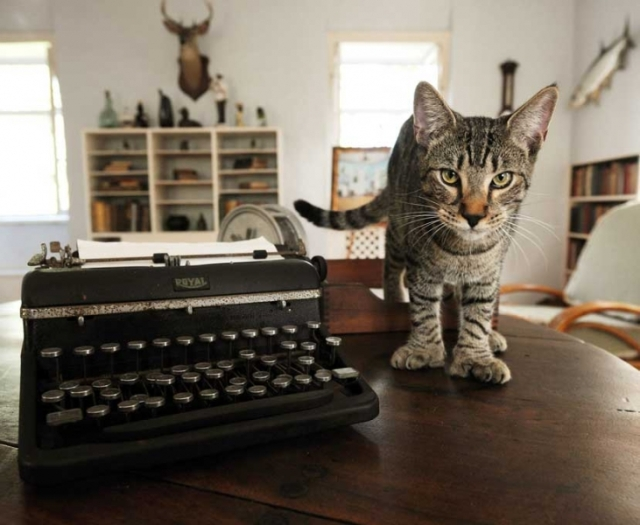 Polydactyl tiger cat standing by a typewriter in the Hemingway House