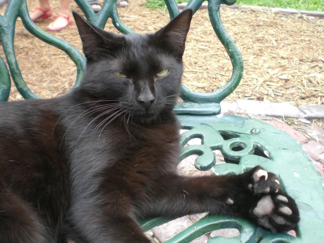 Black polydactyl cat lounging on a chair.